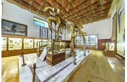 Палеонтологичен музей в Асеновград