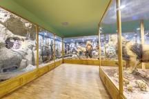 Регионален Природонаучен музей в Пловдив